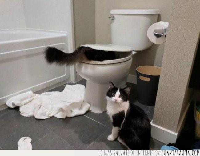 baño,gatos,maldades,trastadas
