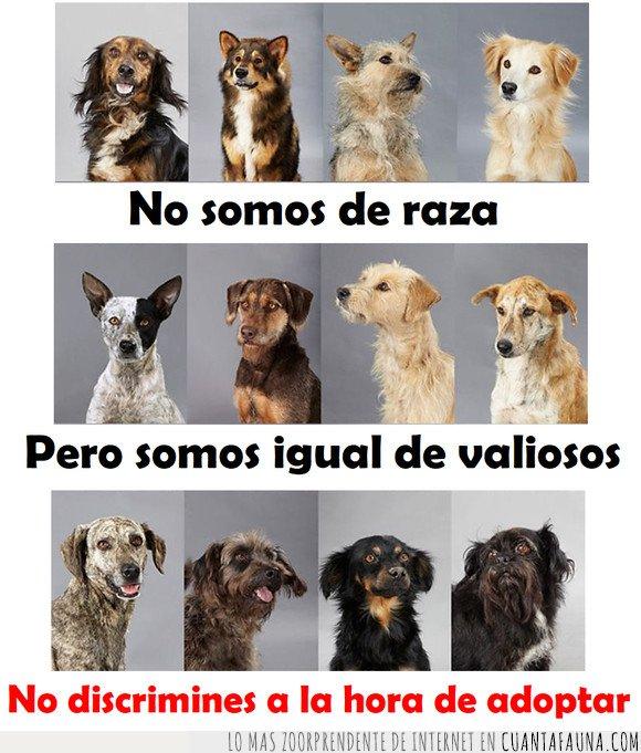 discriminar,perros,razas