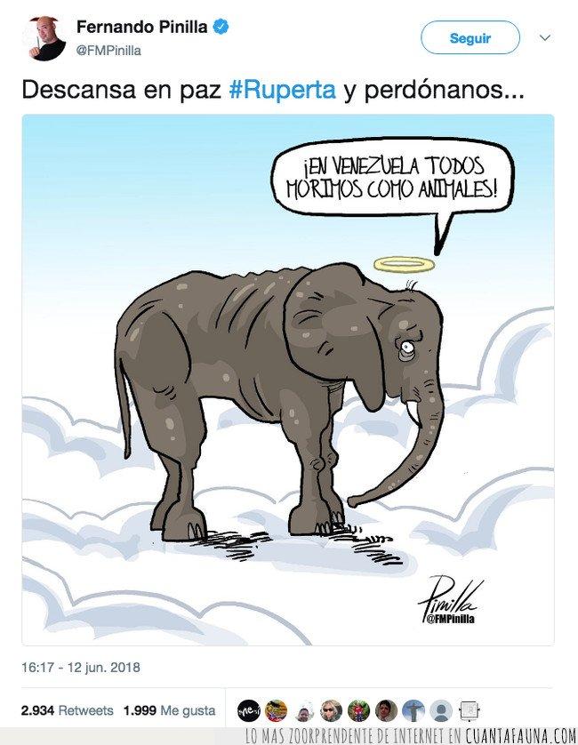 denuncia,elefante,muerte,ruperta,venezuela