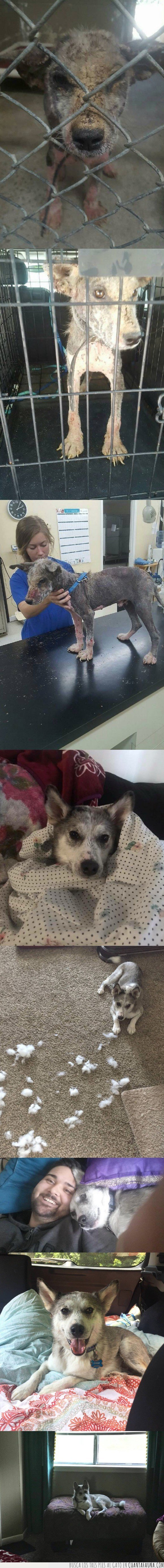 abandono,adopta,perro,sarna