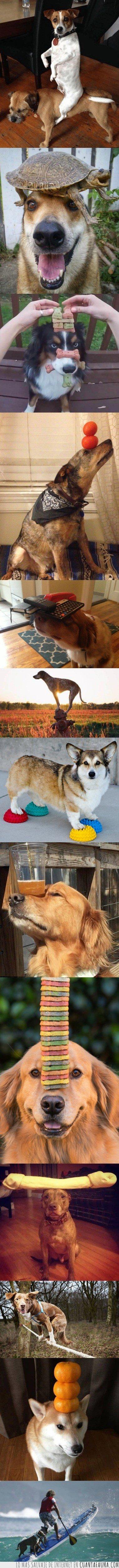 equilibrio,perro
