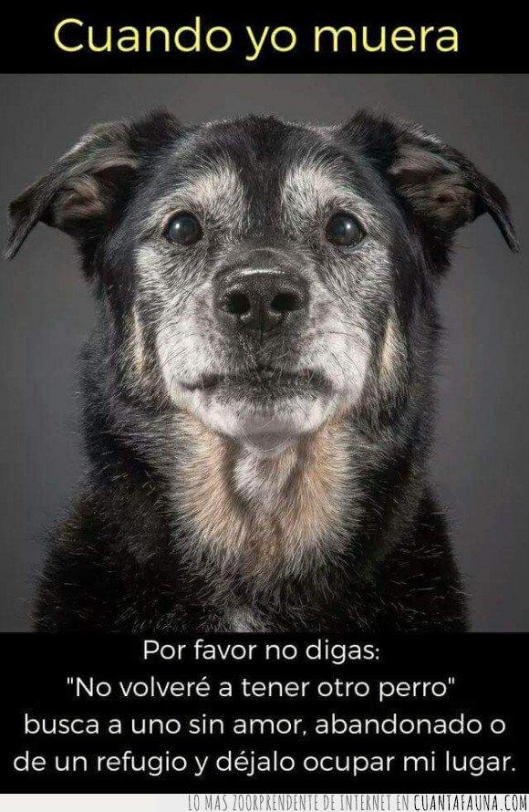adoptar,morir,perro