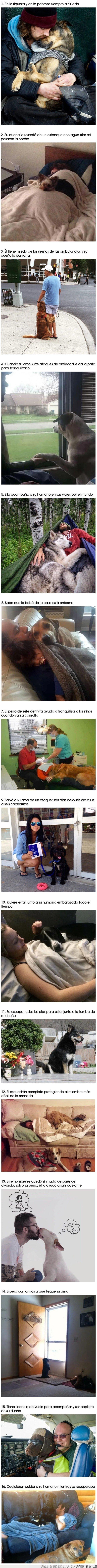 amor,incondicional,perros