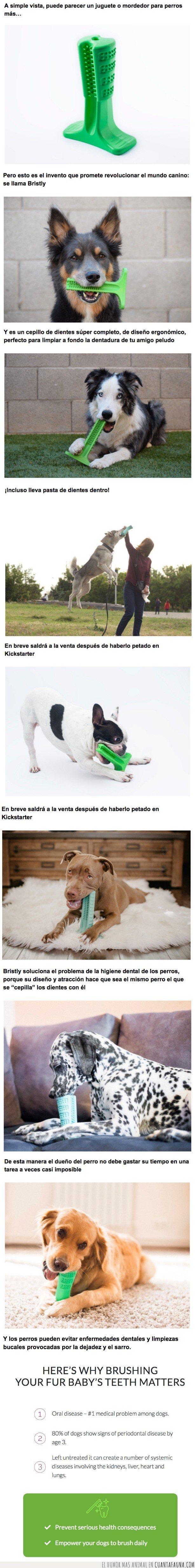 BRISTLY,CEPILLO DE DIENTES,PERRO