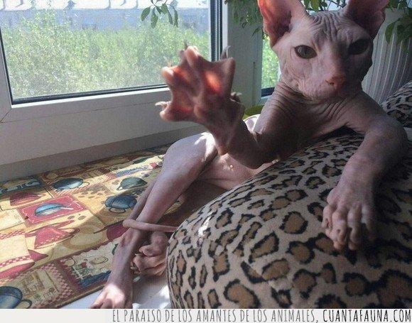 gato,saludando,wtf