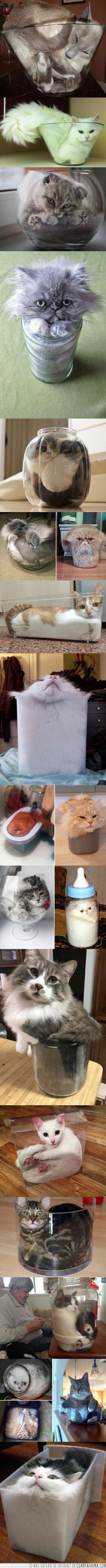 gato,liquido