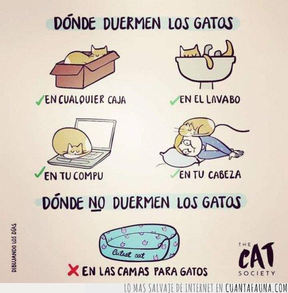 dormir,gatos,sitios