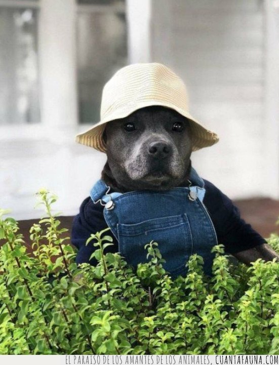 perro jardinero