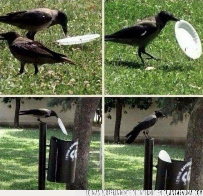 cuervo,reciclar