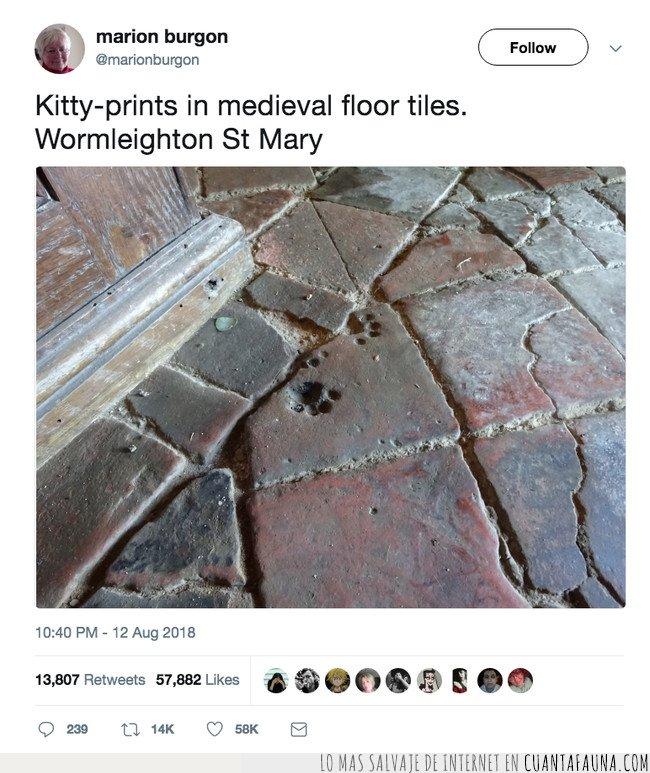 gato,huellas