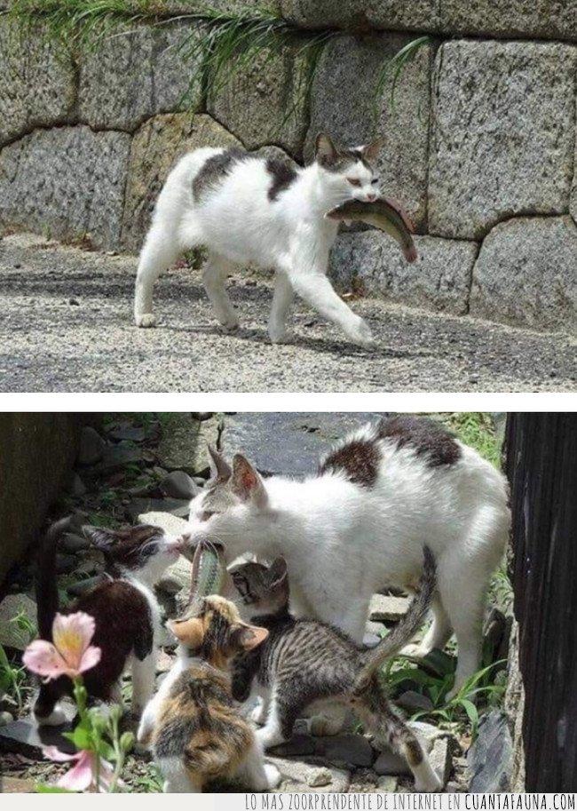 gato,madre