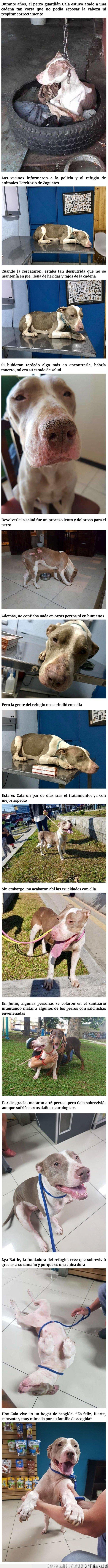 atada,crueldad,perros,veneno