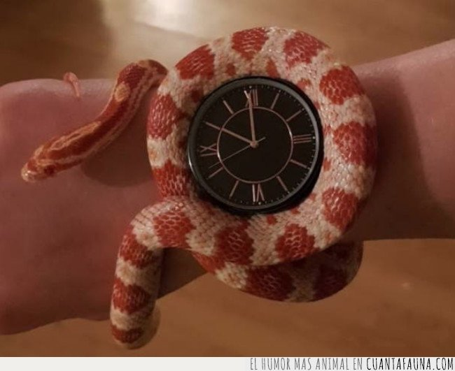 reloj,serpiente