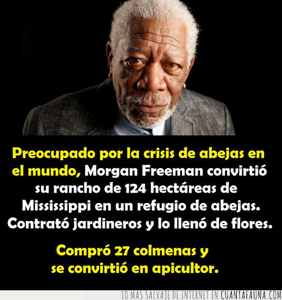 abejas,apicultor,morgan freeman