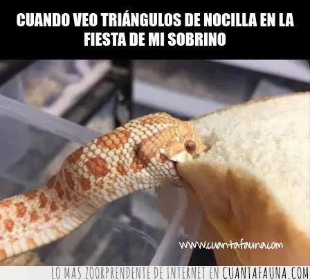 nocilla,serpiente