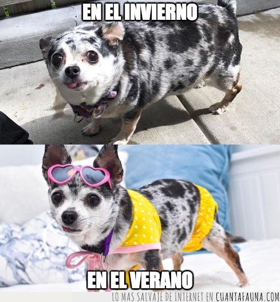 perro,peso,verano