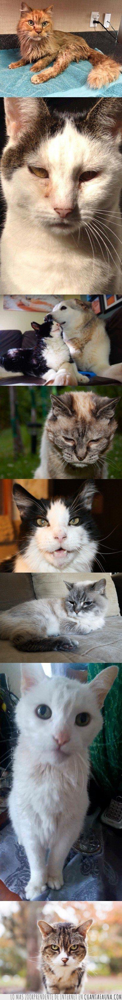 gatos de 20 años