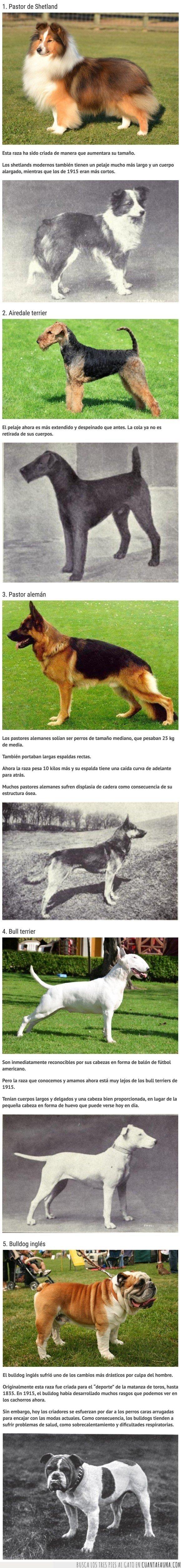 ahora,antes,cambios,perros,razas