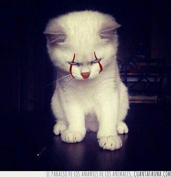 gato,it,pennywise
