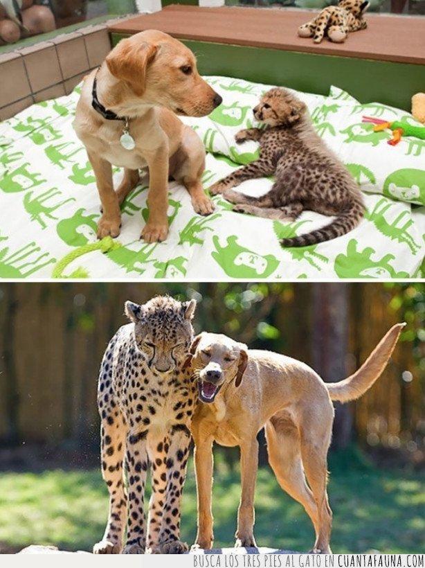 amistad,salvaje