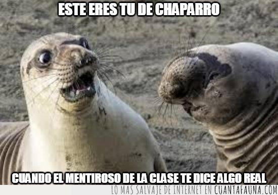 acuaticos,admitelo,focas
