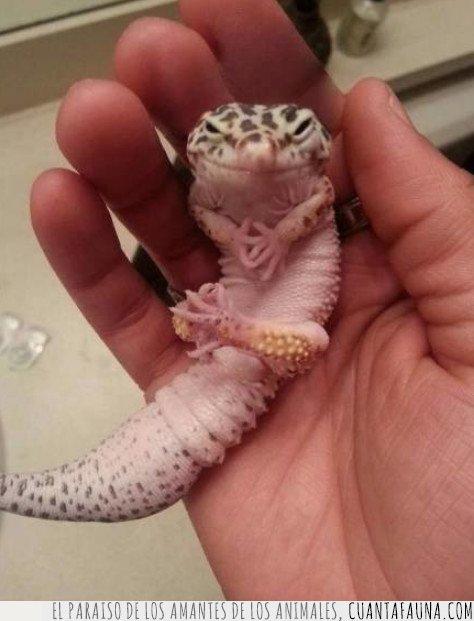 lagarto,reptil