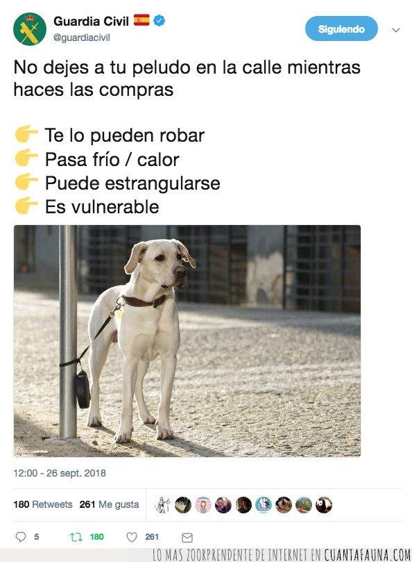 animal,calle,calor,compras,consejo,dejar,frio,perro