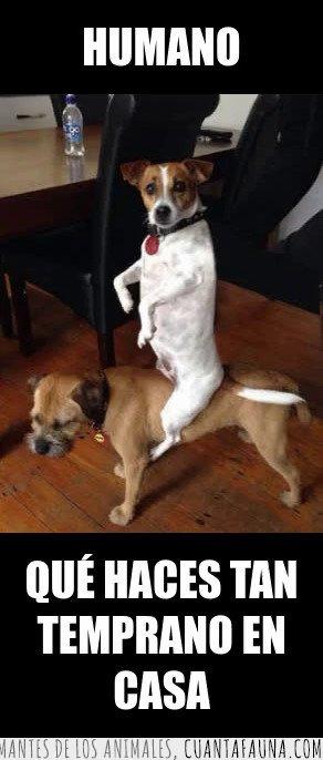 humano,perros