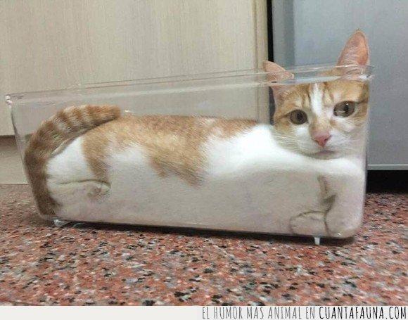 gato,líquido,recipiente