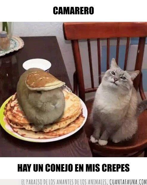 conejo,gato,meme