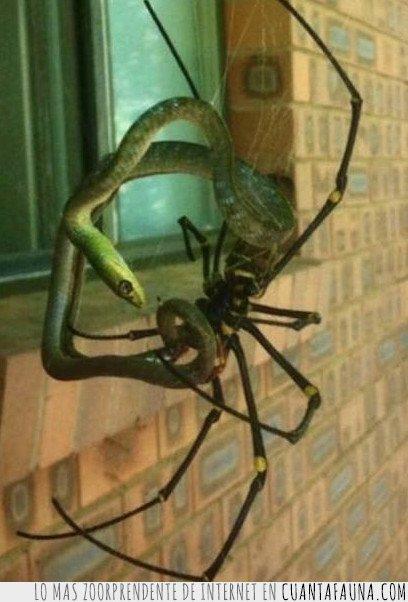 australia,serpiente