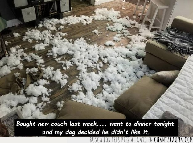 destrozo,perro