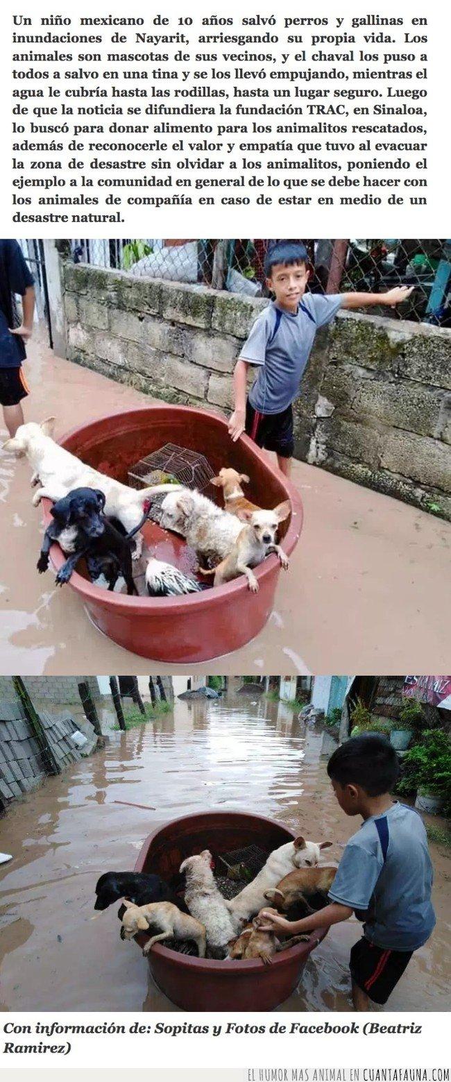 héroe,perro