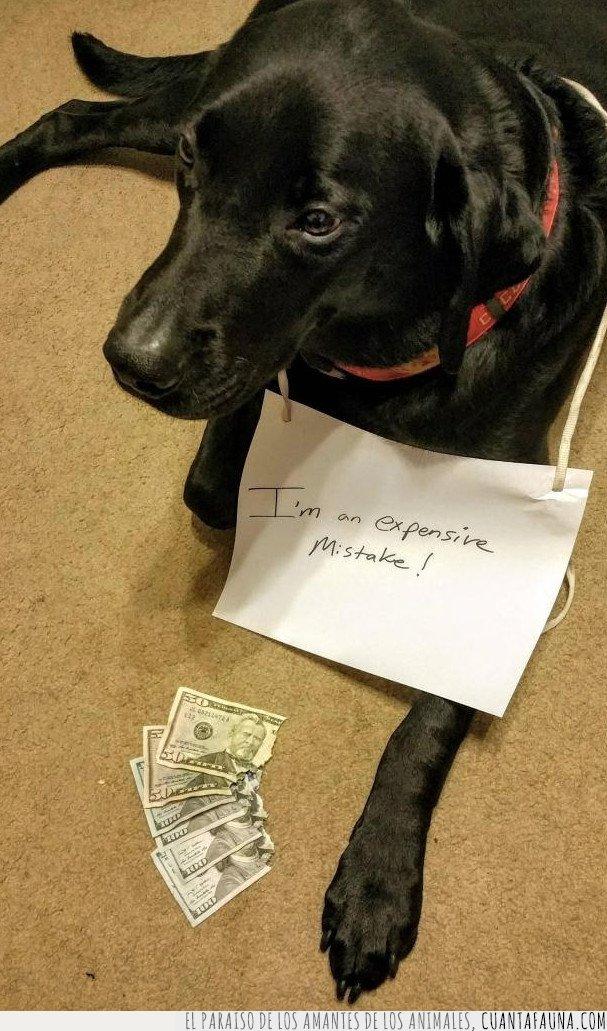 caro,perro