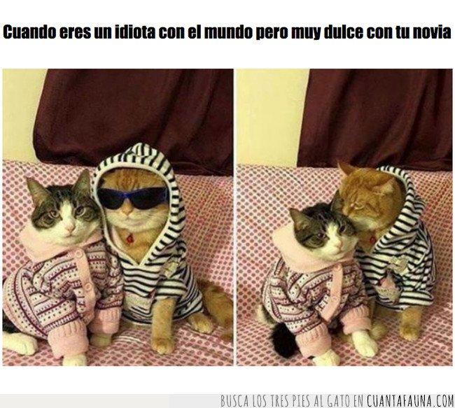 amor,gato