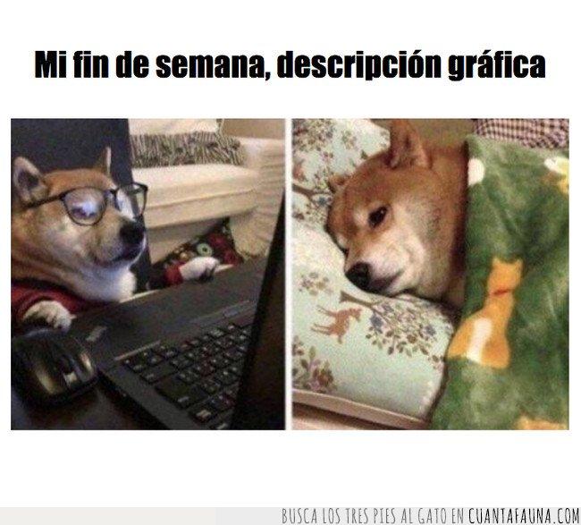 meme,perros