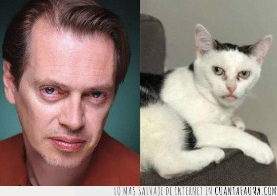 gato,parecido
