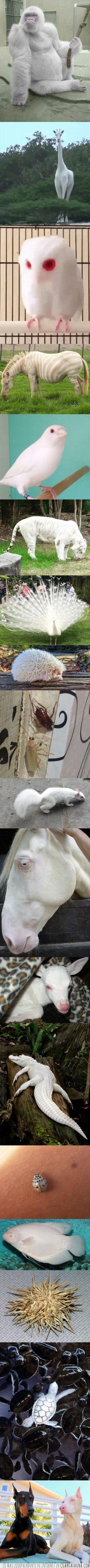 animales albinos,animales salvajes