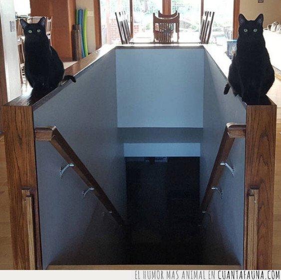 gatos,guardianes
