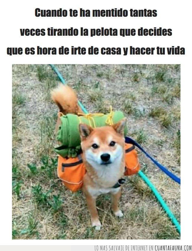 mochila,perro