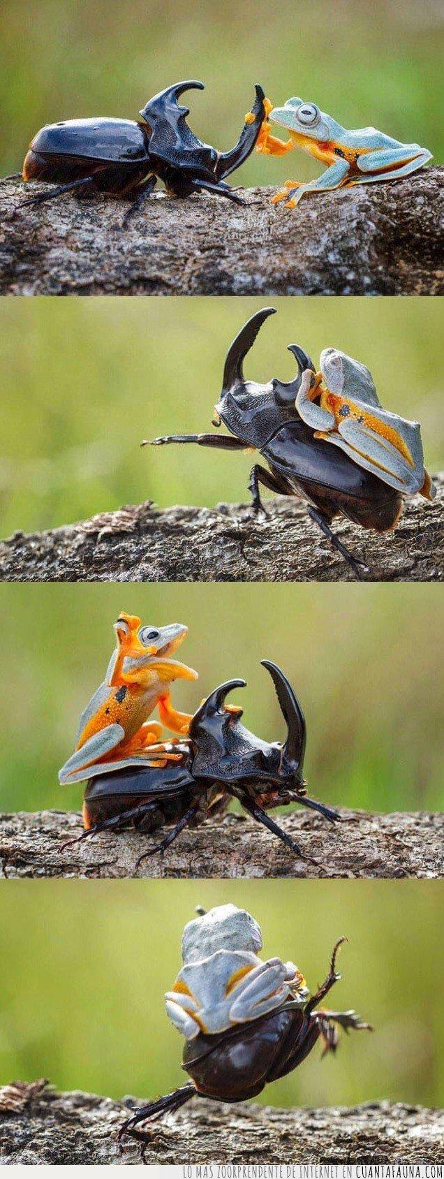 insectos,ranas