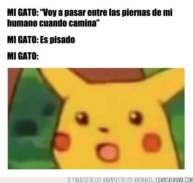 gato,meme,pika