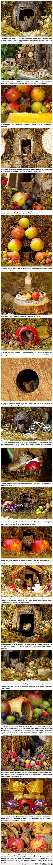 aldea,familia,jardín,miniatura,ratones