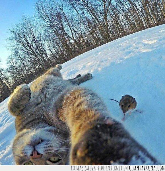 comida,gatos,ratón,selfie