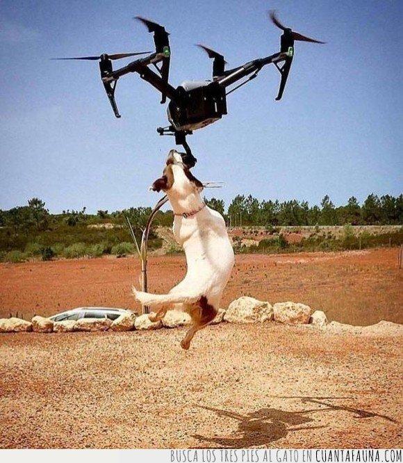 dron,perros,salto