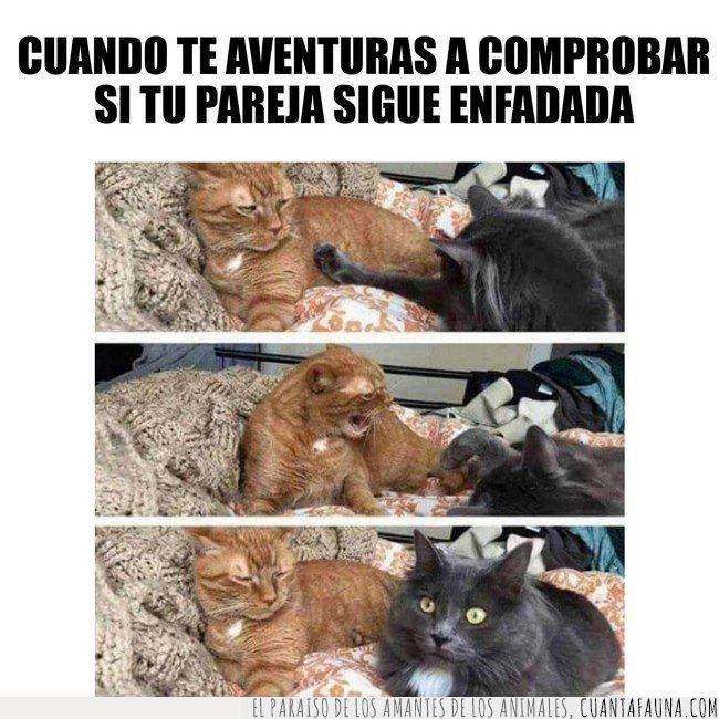 enfado,gato,meme