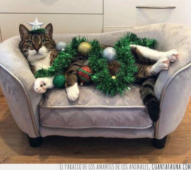 árbol,gato