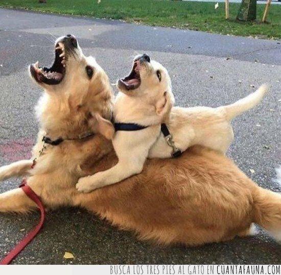 ladrar,perro