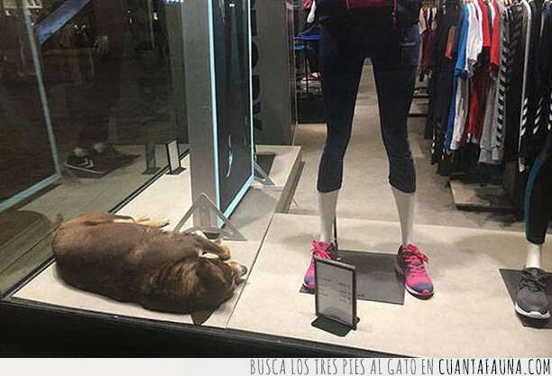 perro,tienda,turquia