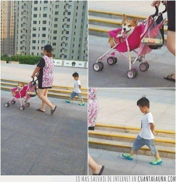 carrito de bebé,hijo,madre,niño,perro
